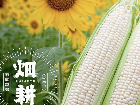 【京都発!!】鮮度こだわりの白とうもろこし「ホワイトコーン」