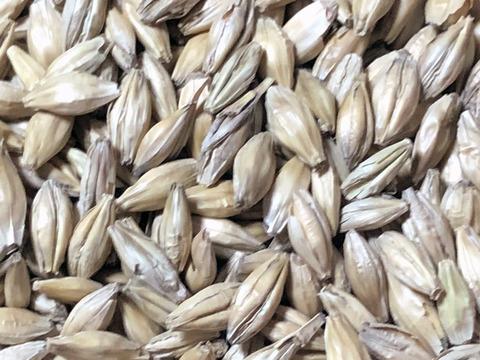 【麦芽水あめ等におすすめ!】二条大麦麦芽(800g)