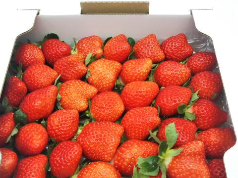 心高鳴る幸せなイチゴの箱!