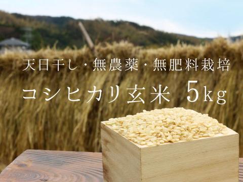 【無農薬・無肥料 生命力溢れる】コシヒカリ玄米5kg