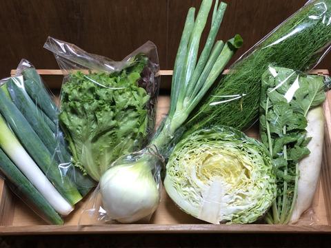 期間限定!霧島産✴︎春の野菜セット✴︎6品目【ハーブもあるよ🌿】