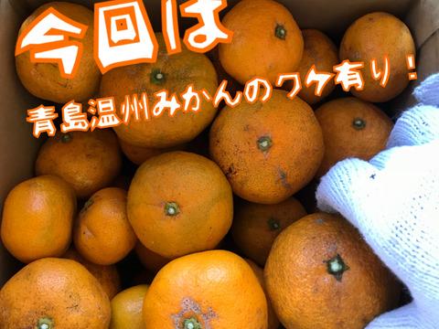 【熱海産♨️農薬化学肥料不使用】《ワケ有り!》青島温州みかん 約4.5kg入り