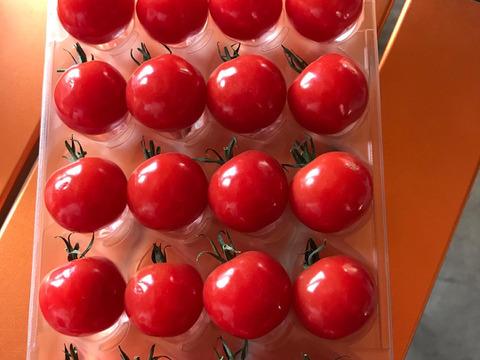 こだわりミニトマト プチぷよ【4パック】