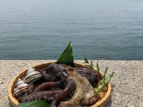 小豆島産天然蛸 1~1.5kg前後/1杯・・・水揚げ次第発送
