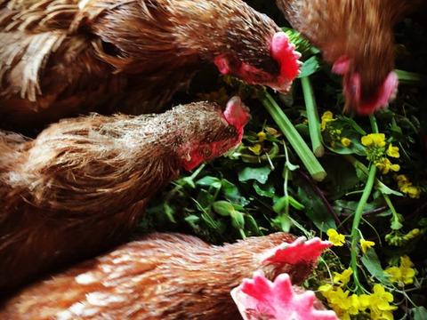 こどもの味覚を育む卵(20個)