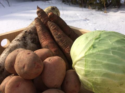雪の下・越冬有機野菜セット