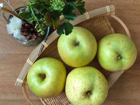 りんご(王林)(加工用)2キロ