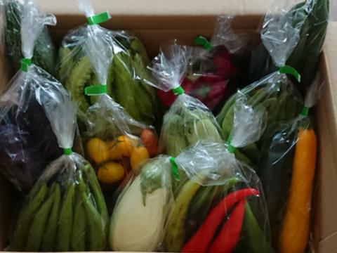 【御中元】【贈り物】旬の元気!野菜セット*5品目以上~農薬/化学肥料・不使用