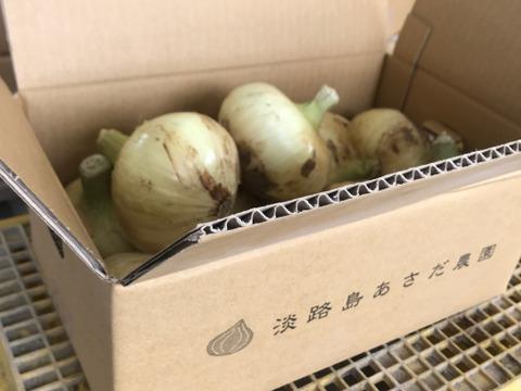 【ギフトにおすすめ】採れたての淡路島玉ねぎ|人気のターザン(中生種)サイズ混 5kg