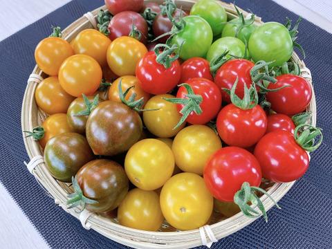 食べてビックリ!味も食感も違うカラフルミニトマトの詰め合わせ(4〜6色:2kg)