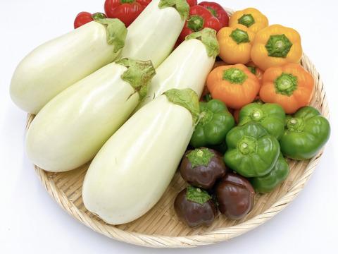 【季節限定】カラフルミニパプリカ(3〜5色/1.5kg)とふわとろ白ナス(10本)の詰め合わせ
