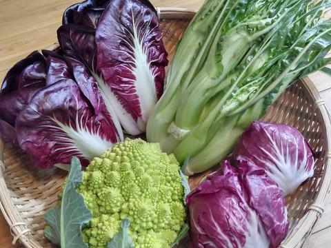 【数量限定】IdeaFarmのおまかせ冬のイタリア野菜セット(3品目)