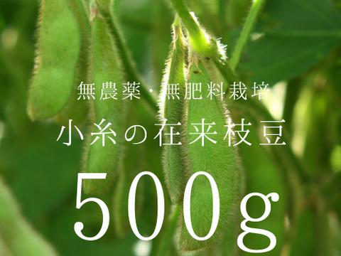 小糸の在来枝豆(枝付き)500g【無農薬・無肥料】