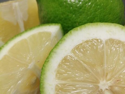 自然農法 SUN2グリーンレモン(農薬・肥料不使用) 1kg