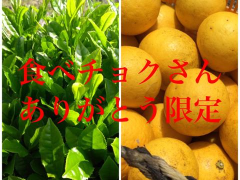 食べチョク限定!手摘み新茶100gとニューサマーオレンジ2キロセット