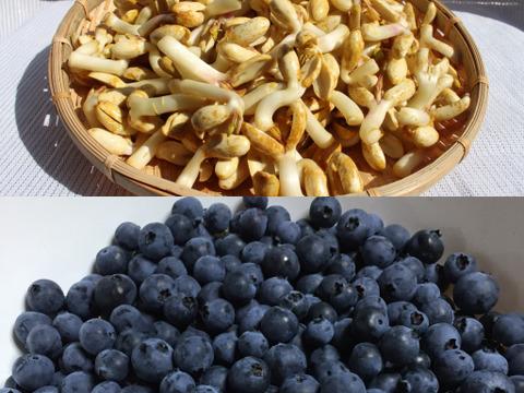 ピーナッツもやし 200g(100g x 2) + ブルーベリー200g