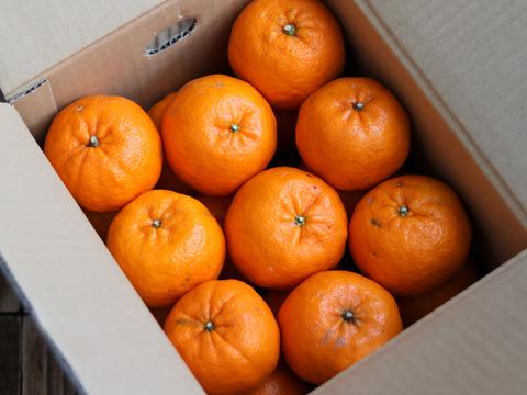 蔵出しポンカン【ご家庭用】2L 3kg箱入り 化学系農薬を使わない栽培