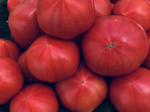 (水切A)樹上でポ〜っと熟れた甘〜いトマト