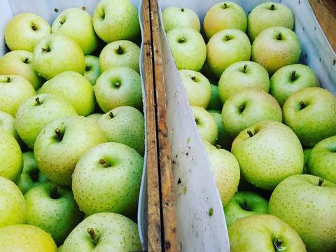 甘い黄色いりんごの王様☆ 家庭用「王林」3kg