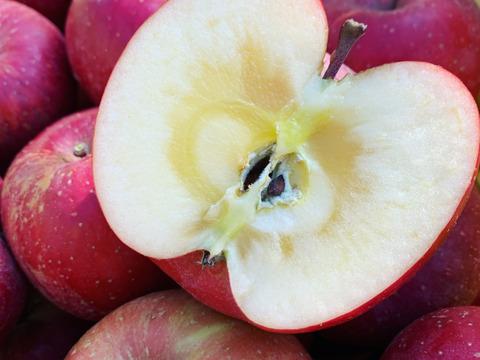 「食べチョク限定」予約受付中!訳ありでも、味は最高!   信州産りんご!!(3kg)8~12個