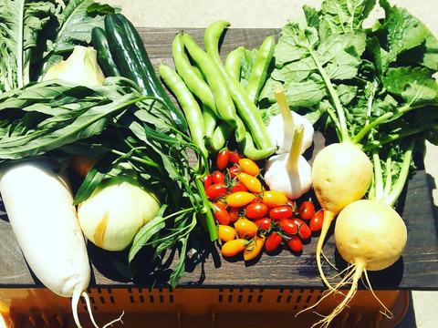 菜園家族の旅する医農野菜セット♪ Mサイズ