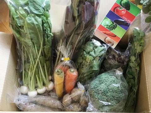【珍しい野菜も2~3品♪】特別版 旬野菜Sセット(約6~7品)