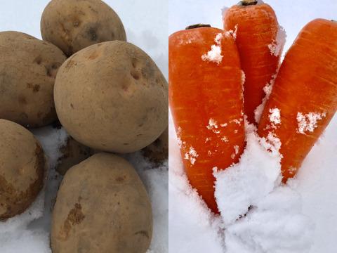 【セット】甘~い!雪下にんじんと訳アリキタアカリ 各5kg