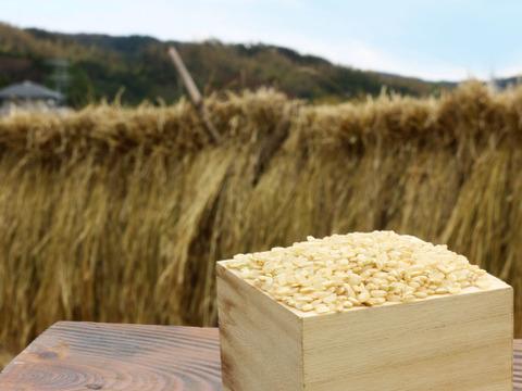 《令和元年産》イセヒカリ玄米2kg【無農薬・無肥料・天日干し】