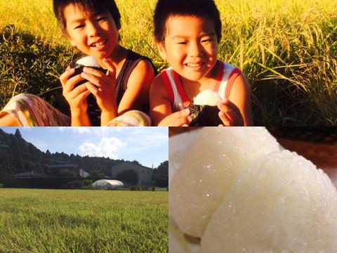 ✴︎ふっくら・もちもち✴︎冷めても美味しい〜 季節の野菜おまけ付 千葉県産コシヒカリ【深田のお米】玄米10キロ