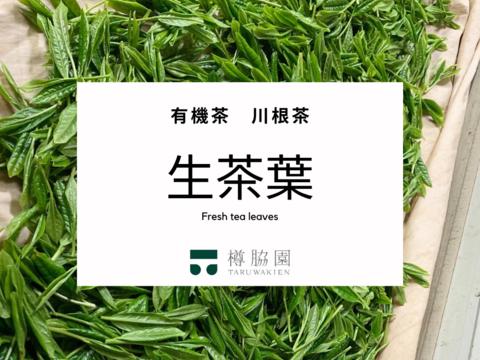 【季節限定・手摘み】有機茶 川根茶 生茶葉 (内容量:25g)