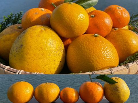 【数量限定】天草の宝石箱!農薬不使用の柑橘セット 箱込み4kg (金峰みかん、河内晩柑、スイートスプリング 、甘夏、橙)