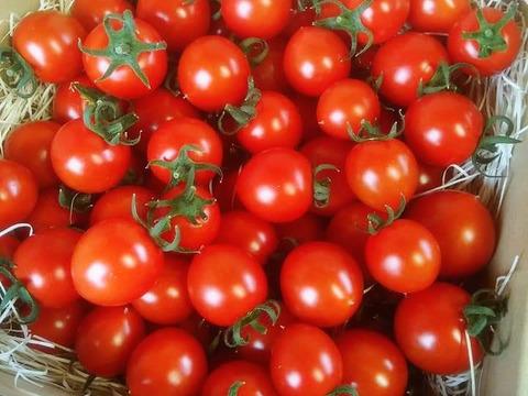 【高糖度】プチっと弾ける濃い味自慢!美肌トマト500g