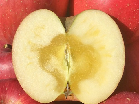 りんご 季節のおすすめ【定期販売】5kg 家庭用