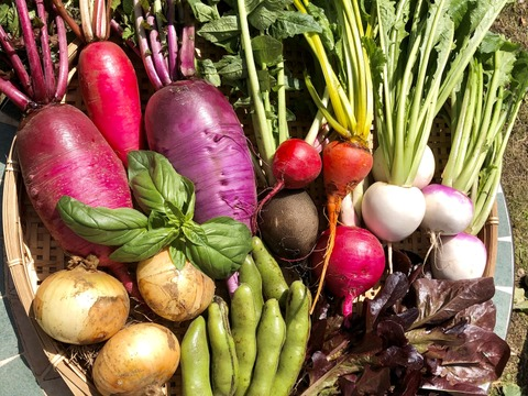 【ZIP!で紹介!】【10品目以上】カラフル!旬野菜!すずなり野菜セット( 簡単レシピ付き )