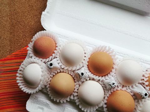 会津地鶏とレグホンの紅白たまごセット