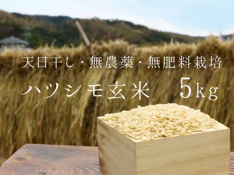 【無農薬・無肥料 生命力溢れる】ハツシモ玄米5kg