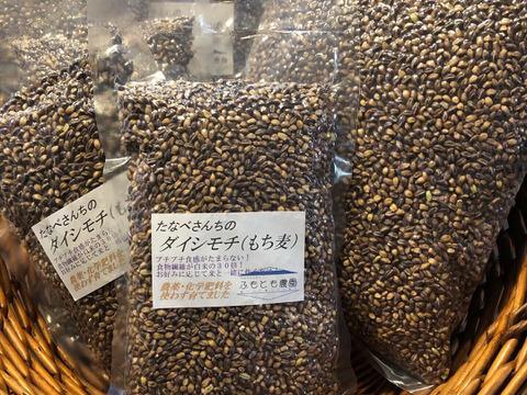 もち麦(ダイシモチ)玄麦10Kg