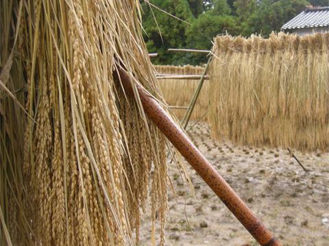 子供から大人、全ての生き物に安心を…無農薬無肥料天日干しササニシキ【玄米10キロ】