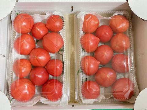 4パック入り!【限定品】甘味酸味うま味の三つ巴!こてらんねぇフルーツトマト約3キロ