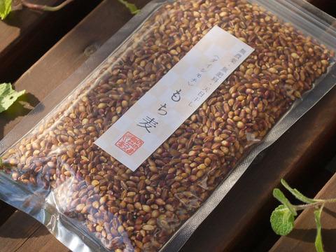 〈ポストに投函〉生命力溢れる もち麦(ダイシモチ)2袋【無農薬・無肥料 自然栽培 天日干し】