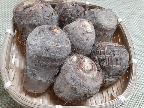 四万十町産ねっとり里芋(白芽芋1キロ)