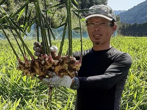 [四万十町産]R2.11月収穫 (洗い生姜、土佐一生姜)4kg