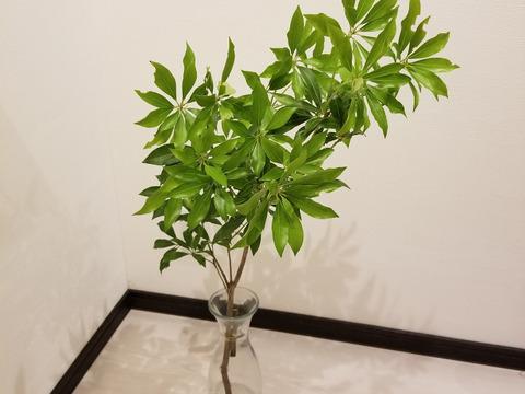 ★オーガニック花木予約販売★《季節の枝モノでグリーン豊かな生活を!》アセビ(90㎝)