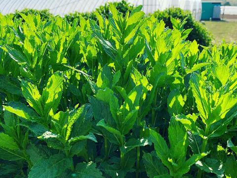 は 有機 栽培 と 無農薬よりすごい有機栽培・オーガニック栽培とは