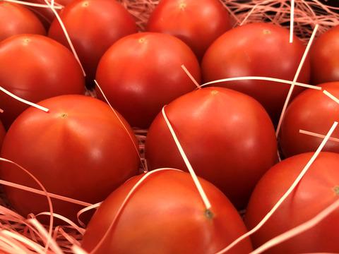 【笑顔になれるトマト、ここにあり!】ぜいたくトマト・春の陣