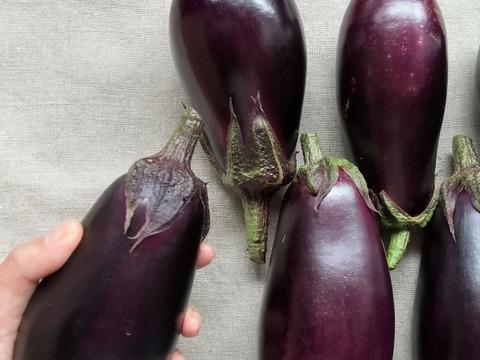 【秋ナス】米なす1.2kg(3~5本) 南アルプスの有機野菜