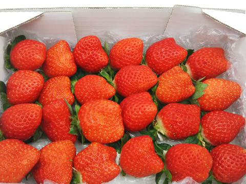 【ハーフ】心高鳴る幸せなイチゴの箱!