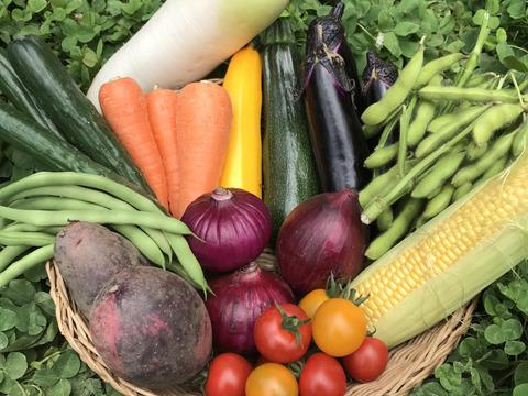 Lサイズ *旬野菜セット(約10~11品)【農薬:栽培期間中不使用】