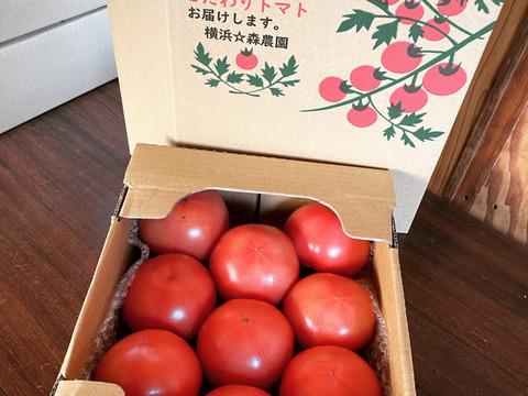 ジュワッと丸かぶり☆リコピンたっぷり!! ハチが作った自然の桃太郎トマト(約2キロ)