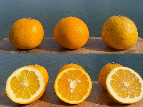 【初回限定BOX】3種柑橘食べ比べセット(河内晩柑・紅河内晩柑・甘夏)箱込み4kg